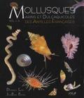 Dominique Lamy et Jean-Pierre Pointier - Mollusques marins et dulçaquicoles des Antilles françaises - 2 volumes.