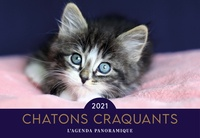Editions 365 - Chatons craquants.