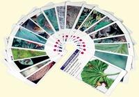 Educagri - Croq'feuilles - 2 jeux en 1 pour découvrir les ennemis de culture et les auxiliaires de lutte biologique.