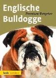 Englische Bulldogge.