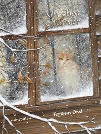 Feridun Oral - Un chat en hiver.