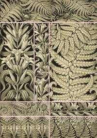 Florian Siffer et David Cascaro - Fantaisies & ornements d'Anton Seder - Planches décoratives.