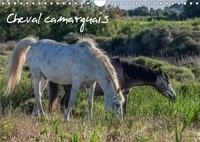 Francis Demange photographe - Cheval camarguais (Calendrier mural 2017 DIN A4 horizontal) - La beauté du cheval semi-sauvage (Calendrier mensuel, 14 Pages ).