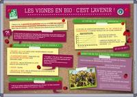 François Mathey - Les vignes en bio : c'est l'avenir !.