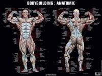 Frédéric Delavier - Poster bodybuilding anatomie.
