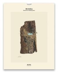 Genevieve Estelle Jones - Merlebleu, Illustrations of the Nest and Eggs of Birds of Ohio (1879-1886) - Une illustration imprimée sur un papier de création avec un livret autour de l'oeuvre.