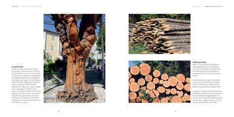 L'arbre dans tous ses états