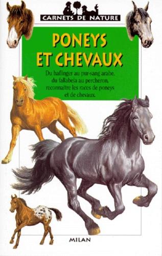Gilles Delaborde - Poneys et chevaux.