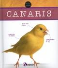 H. Hieronimus - Canaris.