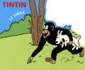 Hergé - Tintin - Le singe.