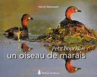 Hervé Stiévenart - Petit bouchon, un oiseau de marais.