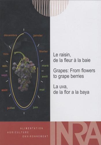INRA - Le raisin - De la fleur à la baie.