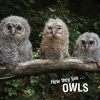 Ivan Esenko et  David Withrington - How they live... Owls - Learn All There Is to Know About These Animals!.