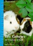 Jacques Bouloc - Les cobayes ou cochons d'Inde.