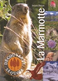 Jacques Drouin - La Marmotte.