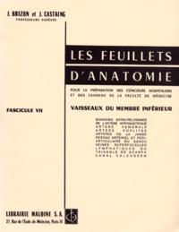 Jean Brizon et Jean Castaing - Les Feuillets d'anatomie - Tome 7, Vaisseaux du membre inférieur.
