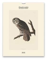 Jean-Jacques Audubon - Chouette cendrée, Les oiseaux d'Amérique (1827-1838) - Une illustration imprimée sur un papier de création avec un livret autour de l'oeuvre.