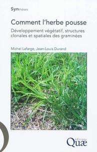 Histoiresdenlire.be Comment l'herbe pousse - Développement végétatif, structures clonales et spatiales des graminées Image