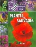 Jean-Marie Polese et  Losange - Encyclopédie visuelle des plantes sauvages.