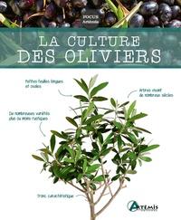 Jean-Marie Polese - La culture des oliviers.