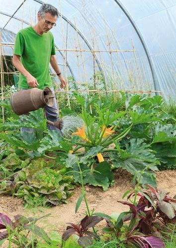 Cultiver les légumes sous serre et autres abris. Serres, tunnels, châssis, voiles...