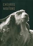 Kevin Horan - Chèvres ou moutons.