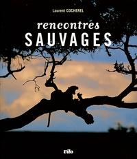 Laurent Cocherel - Rencontres sauvages - Face à face avec la grande faune.