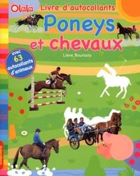 Lieve Boumans - Poneys et chevaux.