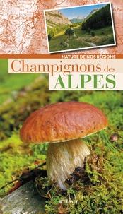 Losange - Champignons des Alpes.