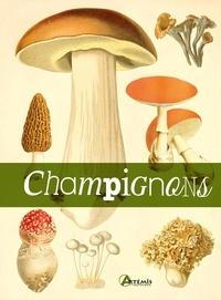 Champignons -  Losange |