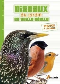 Losange - Les oiseaux du jardin en taille réelle.