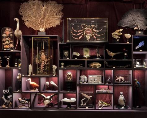 Deyrolle. Un cabinet de curiosités parisien