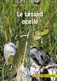 Blackclover.fr Le Lézard ocellé Image