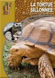 Mario Herz - La tortue sillonnée - Centrochelys sulcata.