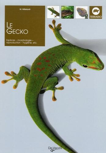 Massimo Millefanti - Le Gecko.