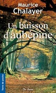 Maurice Chalayer - Un buisson d'aubépine.