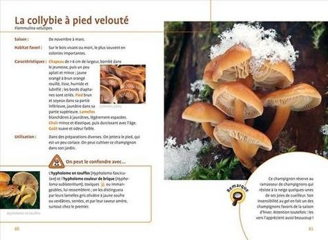 Allez aux champignons. Reconnaitre, cueillir, cuisiner