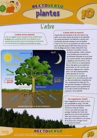Deedr.fr Plantes : l'arbre Image