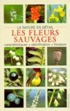 Michael Lohmann - Les fleurs sauvages.