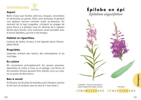 Le petit guide des plantes sauvages comestibles. 70 espèces à découvrir