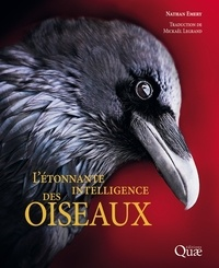 Feriasdhiver.fr L'étonnante intelligence des oiseaux Image