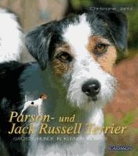 Parson- und Jack Russel Terrier - Große Hunde im kleinen Körper.