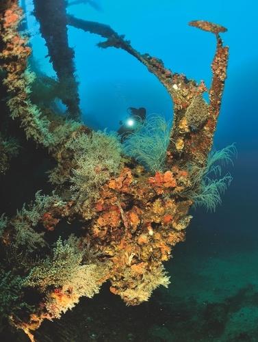 Plonger dans les mers du monde. Mes spots préférés