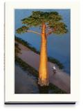 Pascal Maître - Baobab - L'arbre magique.