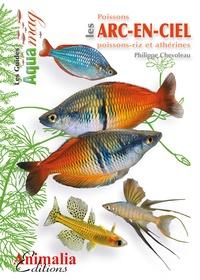 Deedr.fr Les poissons arc-en-ciel Image