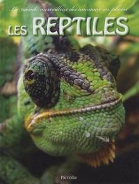 Piccolia - Les reptiles.