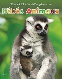 Piccolia - Mes 800 plus belles photos de bébés animaux.