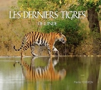Histoiresdenlire.be Les derniers tigres de l'Inde Image