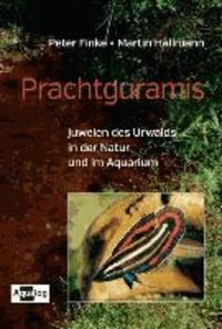 Prachtguramis - Juwelen des Urwalds in der Natur und im Aquarium.