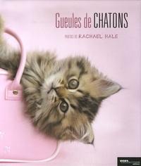 Rachael Hale - Gueules de chatons.
